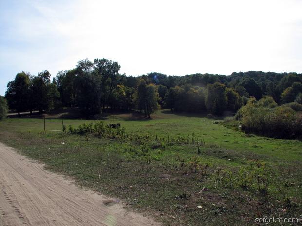 Тимановка. Вид на лес.