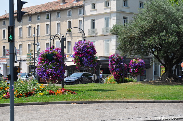 Flowers in Carpentras.